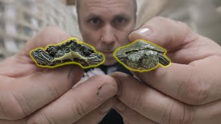 i-got-2-two-headed-turtles-and-became-a-fireman-for-the-day-brian-barczyk