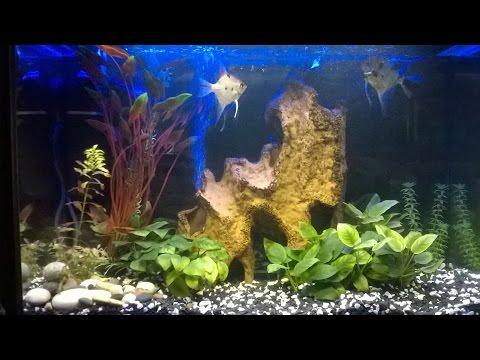 Освещение аквариума.Светодиодная подсветка с лампой УФ света.