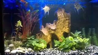Освещение аквариума.Светодиодная подсветка с УФ лампой.(Как сделать светодиодную подсветку с УФ-лампой для домашнего аквариума своими руками., 2016-04-06T21:05:02.000Z)