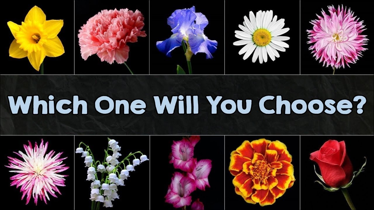 The Flower You Pick Will Reveal Your True Personality Youtube