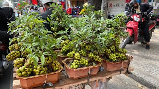 Mua cây sung siêu trái nhưng 3 ngày sau chỉ còn gốc với lá và đây là lý giải của người bán