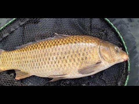 #VLOG FISHING GALATAMA PANTAI INDAH KAPUK (PIK) fish 9kg