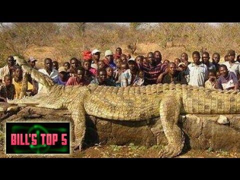 TOP 5 BIGGEST CROCS  IN THE WORLD