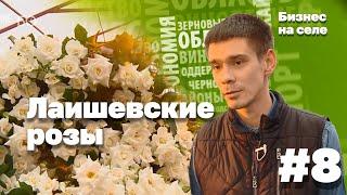 видео Выращивание роз на продажу