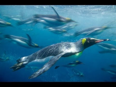 Beauty Under Antarctica's Ice Sheet, Icebergs & Penguins [Wi