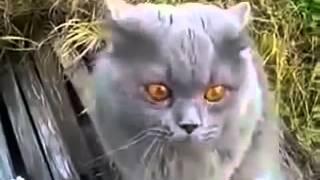 Похоже кот кроет матом