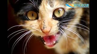 112 случаев заболевания бешенством среди животных выявлено за год в Могилевской области