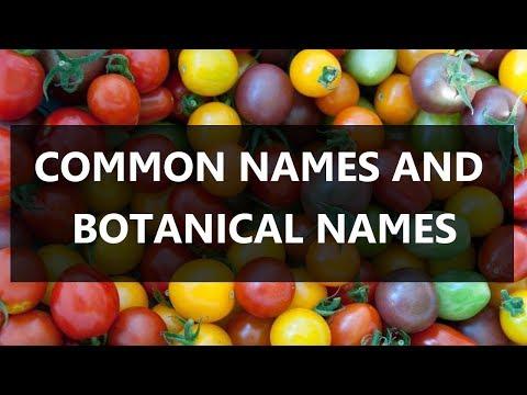 Common Names And Botanical Names