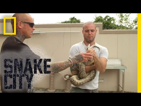 Python Power | Snake City