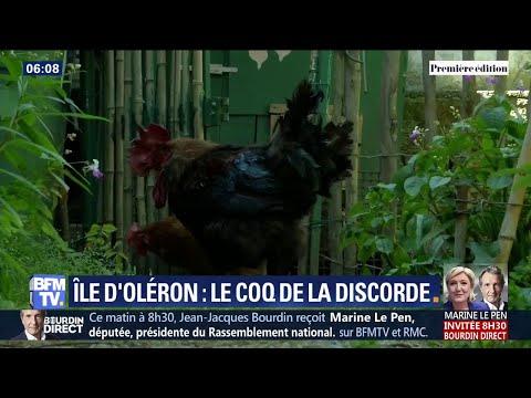 Accusé de trop chanter, le coq Maurice de Saint-Pierre d'Oléron sera jugé début juillet