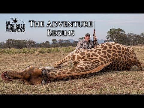 Wildebeest & Rogue Giraffe Hunt |