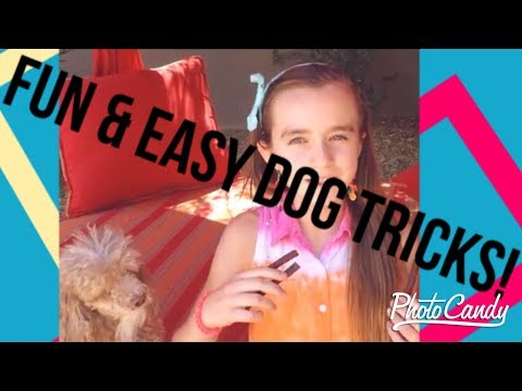 4 Easy and Fun Dog Tricks