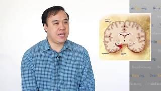 Huang Yu: Researching Alzheimer's Disease