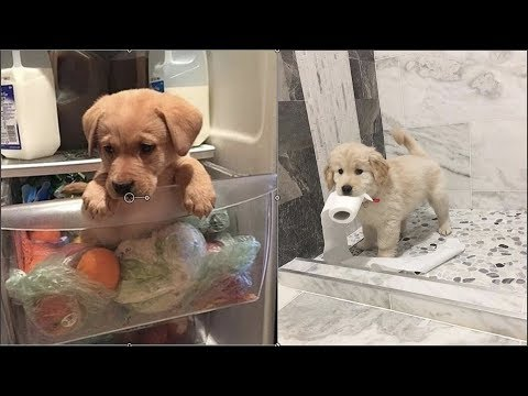 Cute baby animals Videos Compilation cute moment of the animals - Cutest Animals #2