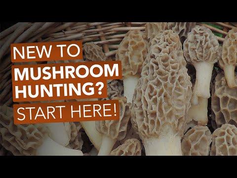 New To Mushroom Hunting? Start Here!