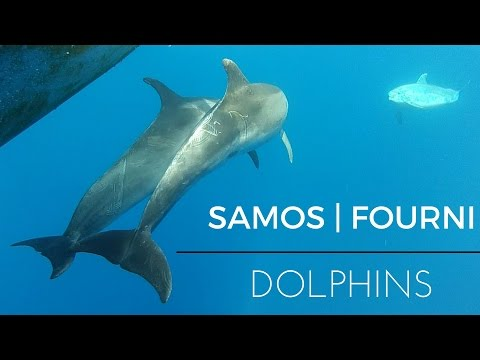 Dolphins of Fourni & Samos, Greece (GoPro)