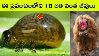 Top 10 Amazing and unbelievable  creatures in the world  | Bmc facts | Telugu