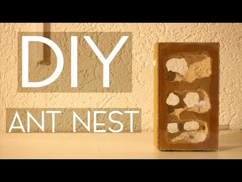 DIY - Tower Nest -  Giant Caves for Your Ants! (feat. Messor Colony)