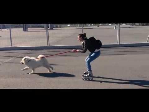 Катания на роликах с Самоедом в Олимпийском парке