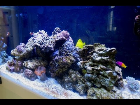 Red Sea Max C 250 Reef Aquarium Part 4 Cycling From Day 50 To 75 You