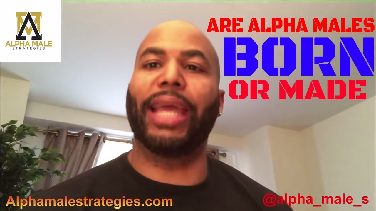 what is an alpha male in humans