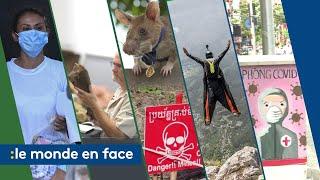 Rat détecteur de mines, base jump... Les infos que vous avez peut-être ratées cette semaine