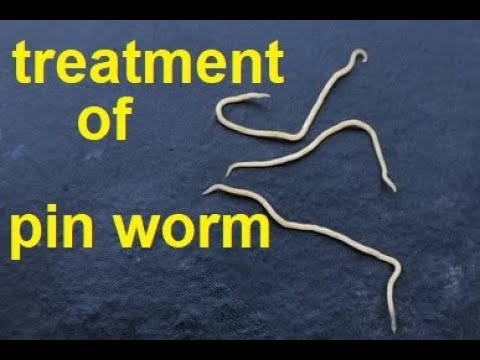 pinworm worms pinworms)
