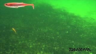 Daiwa Duckfin Live Shad video