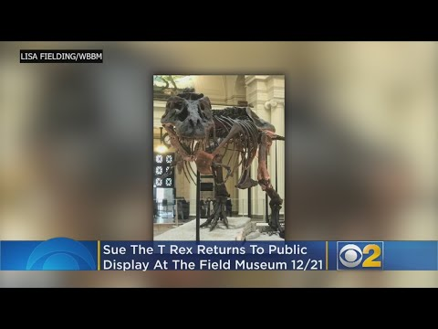 Lance Houston - Sue the T Rex's New Exhibit Will Open Soon!
