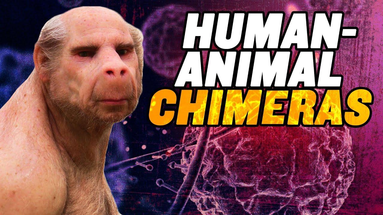 Download Human Animal Chimeras: US Senate OPPOSES Ban