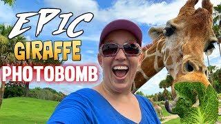 GIRAFFE PHOTOBOMB!! || Mommy Monday
