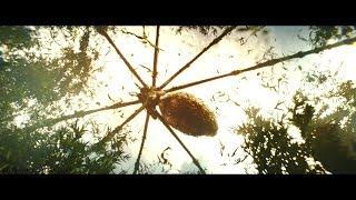 Kong: Skull Island | Giant Spider Attack Scene [2017]