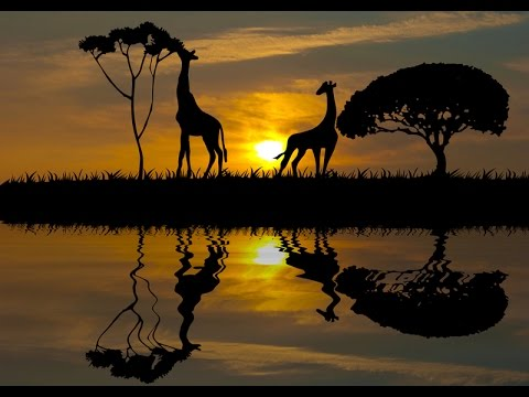 Путешествие в Африку. Сады