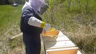 Minnesota Top Bar Bee Hive