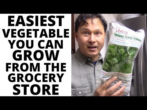 Easiest Vegetable You Can Grow from the Grocery Store