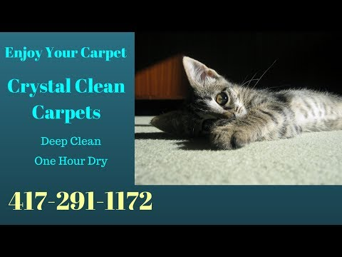 Joplin Mo  Absolute best Carpet Cleaner
