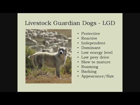 A Deeper Dive into Livestock Guardian Dogs (Part 2 of 3)