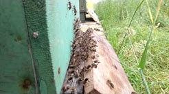 Mehiläispesän ilmastointilaitteet