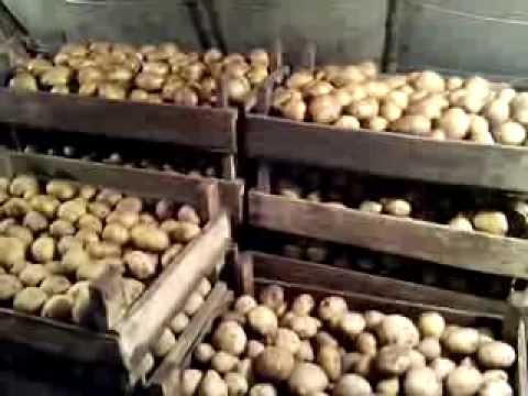 АТ22 Парша картофельная и как с ней бороться