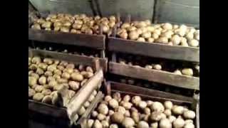 видео Как бороться с паршой. Народные средства против парши яблони