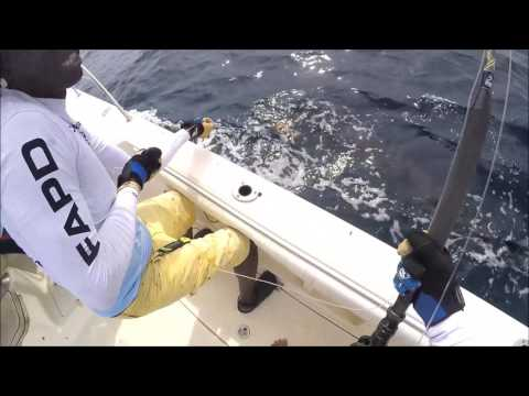 Fishing in Cameroon for blue marlin - tag and release