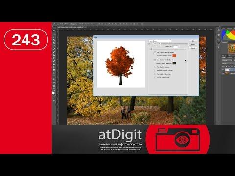 Скрытые возможности Photoshop: высаживание деревьев на фото