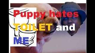 Headache Puppy Hates Toilet