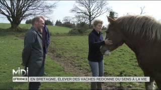 FEUILLETON En Bretagne élever des vaches redonne du sens à la vie hd720