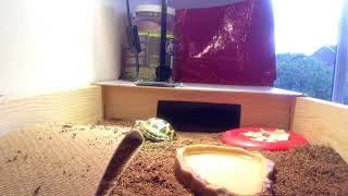 How to make a living space for tortoises