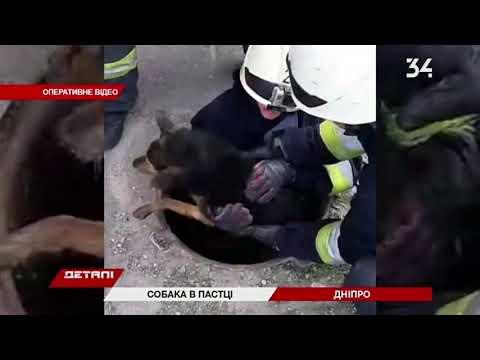 34 телеканал: В Днепре пятеро спасателей вытащили собаку, которая упала в колодец