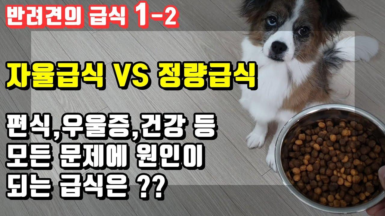 강아지 사료 잘못 주면 독이된다?? 올바른 반려견급식에대해서 알아 봐요! 자율급식 vs 정량급식