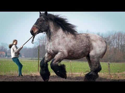 I 9 Cavalli