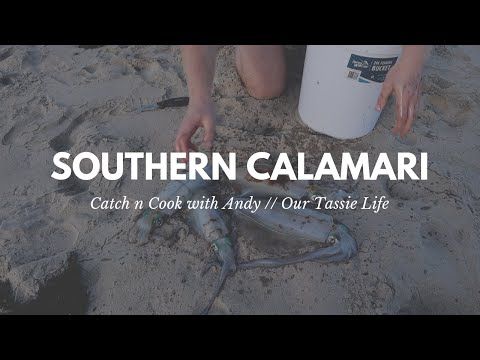 Tasmanian Squid Catch & Cook // Fishing With Andy // Our Tassie Life // Episode 4