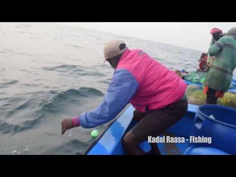LONG LINE FISHING IN SEA – KINGFISH CATCHING